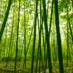 Wandlungsphase Holz